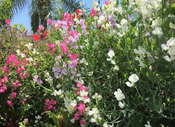 Beautiful Blooms NIGC - June 5, 2020