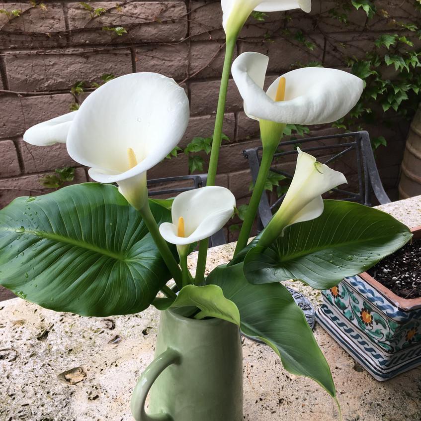 Lillies from Ania Sullivan's yard