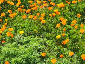 Beautiful Blooms - NIGC - April 10, 2020