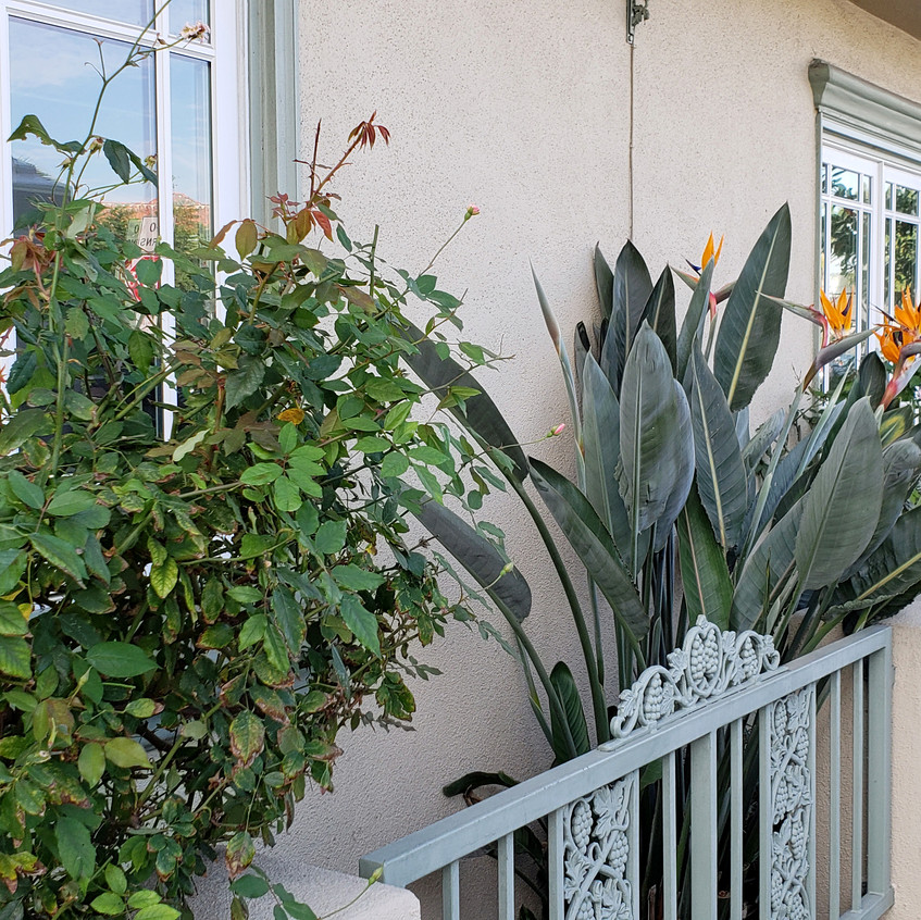 side garden2