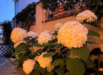 Beautiful Blooms NIGC - July 2, 2020