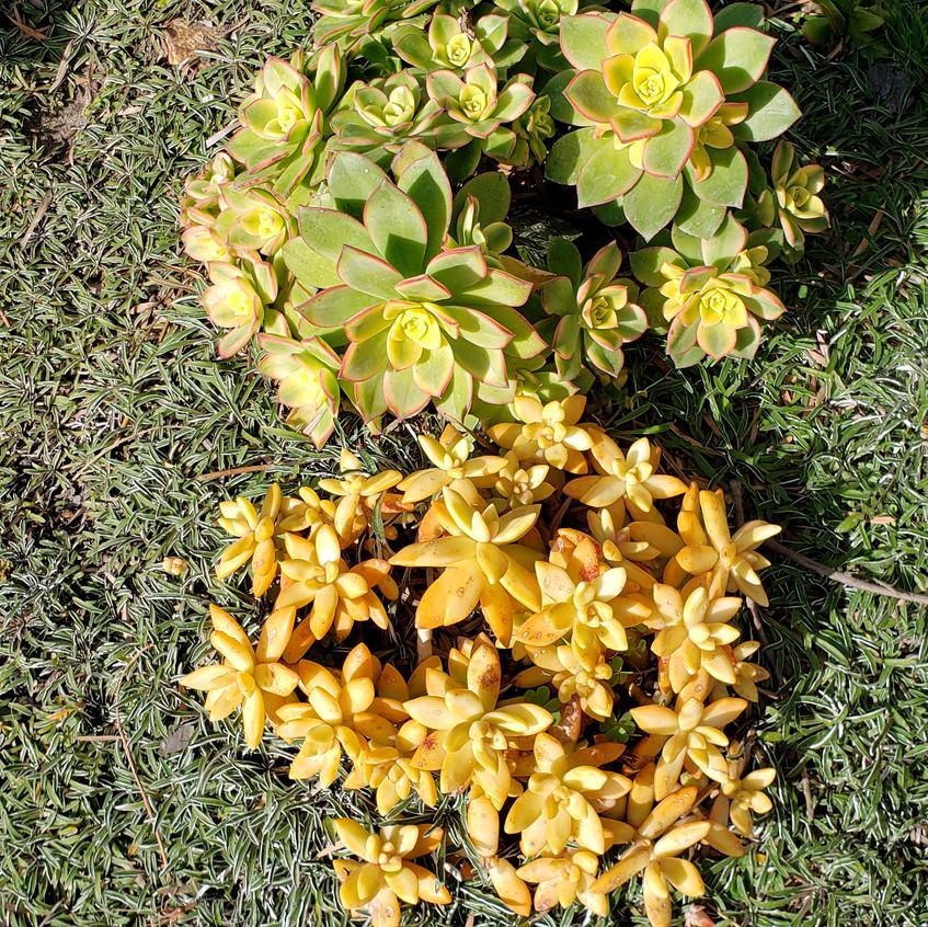 succulent textures,diemond grass