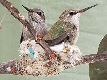 Humming bird photography by Trish Schooley