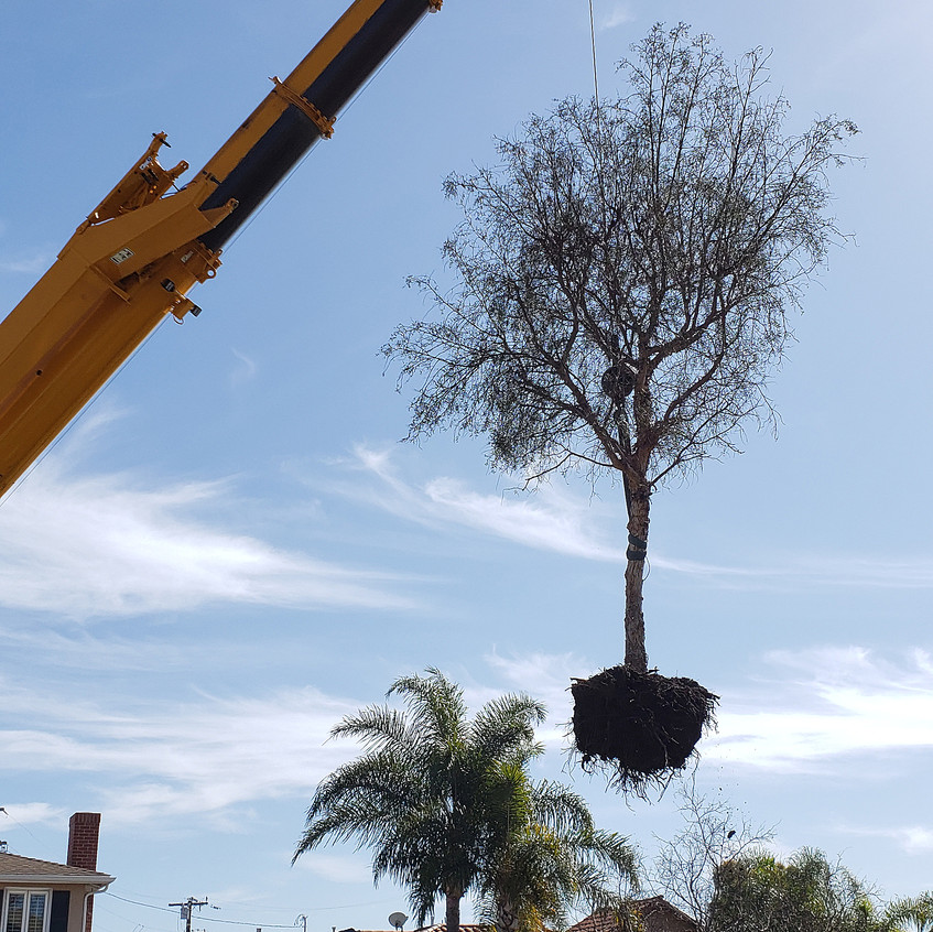crane, dead tree