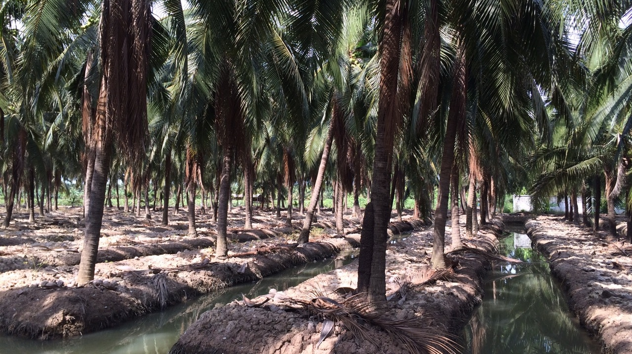Coconut Farms - Landscape