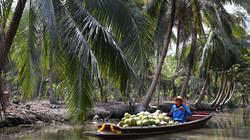 Coconut Farms - Landscape