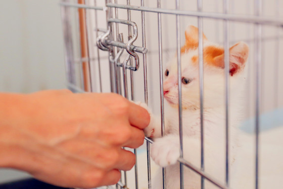"""How to tell if that rescue animal is """"The One for You""""?"""