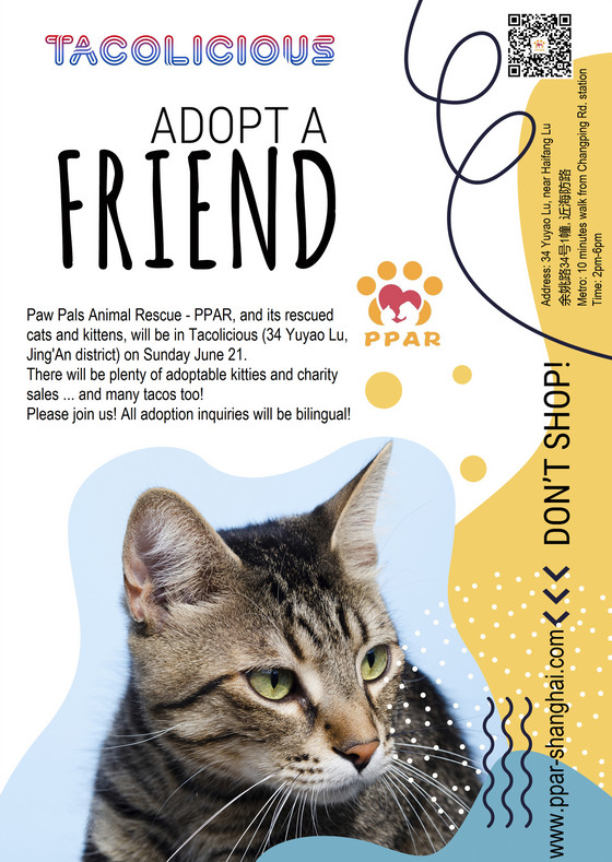 PPAR Cat Adoption Day @Tacolicious Jing'An
