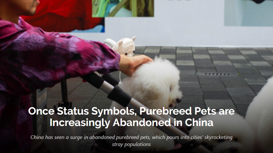 Once Status Symbols, Purebreed Pets are Increasingly Abandoned in China