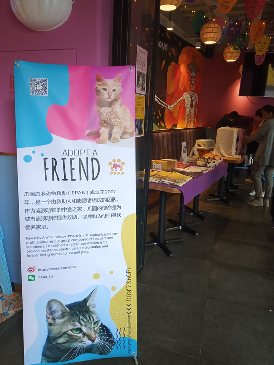 Recap of the PPAR Cat Adoption Day @Tacolicious Jing'An