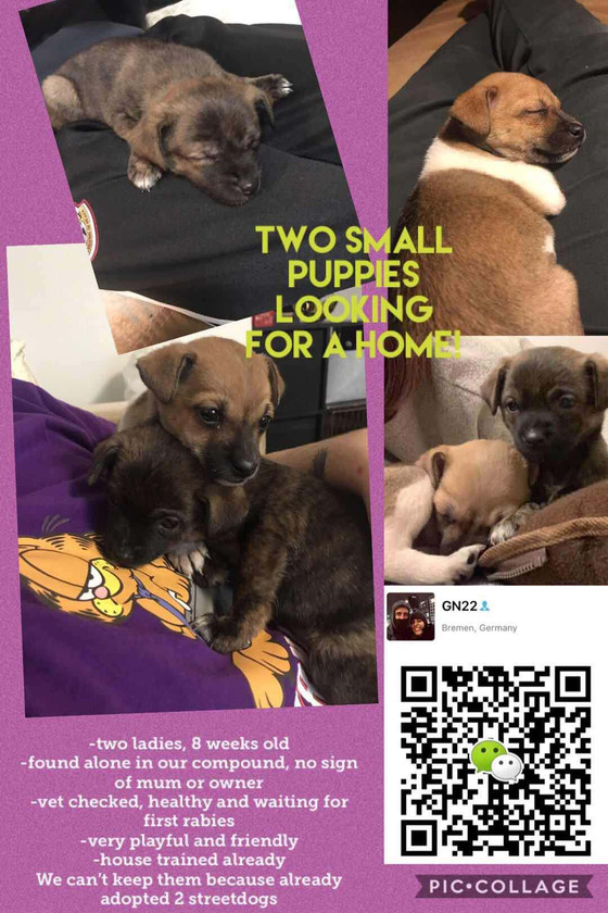 Looking for adoption-Two puppies