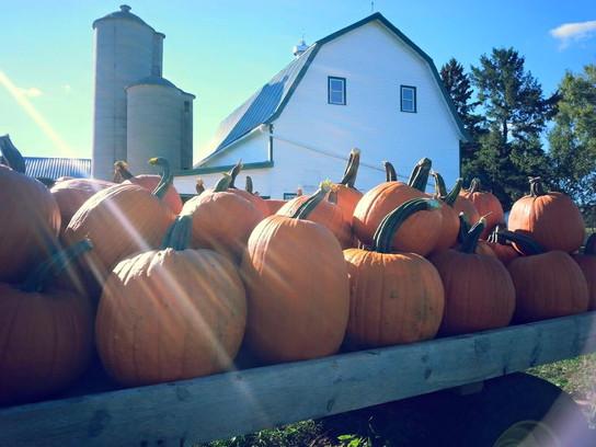 Wagon full of pumpkins!