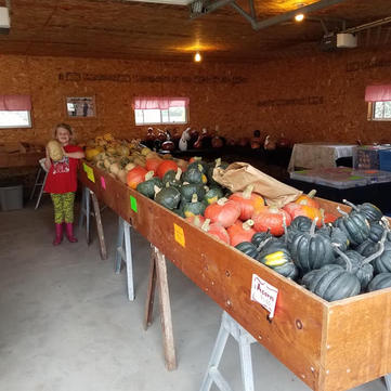 Large selection of squash varieties