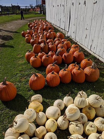 Hermanson Pumpkin Patch pumpkin varieties