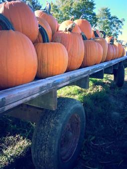 More & more pumpkins!