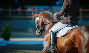 Dressage horse with rider in close-up during a test at a horse show._.jpg