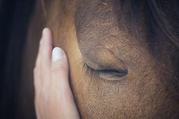 A female hand stroking a brown horse head - Close up portrait of a horse - Eyes shut - Ten