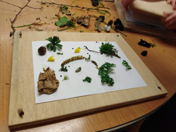 Collecting and pressing plants from The