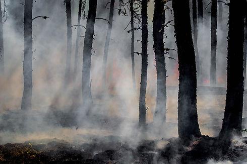 wildfireprevention.jpg