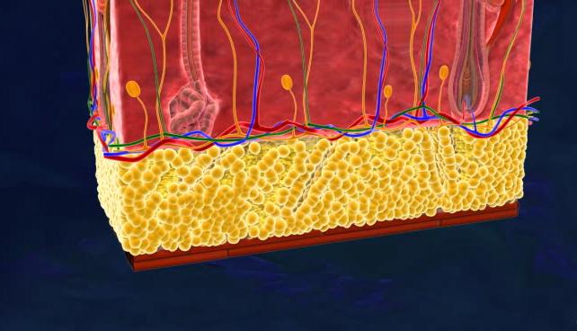 Объем жировой ткани уменьшился