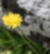 flower rock.jpg