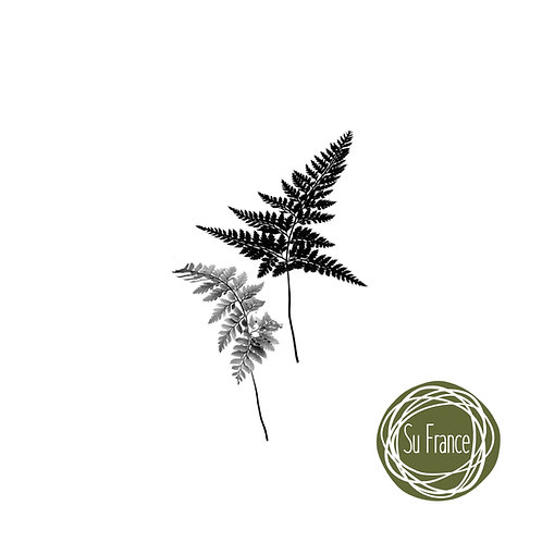 Artist's Proof Print Fern Leaves