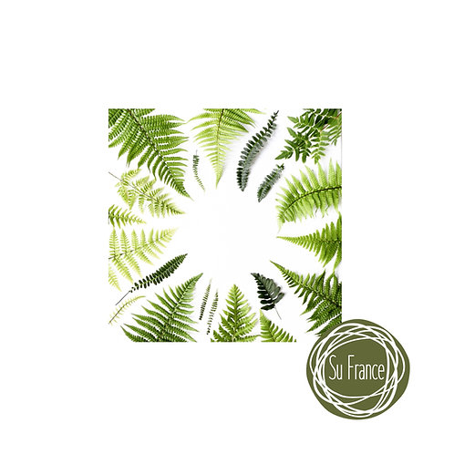 Artist's Proof Print Collected Fern Leaves