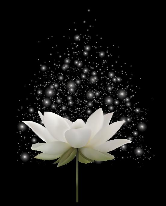 OM & Lotus