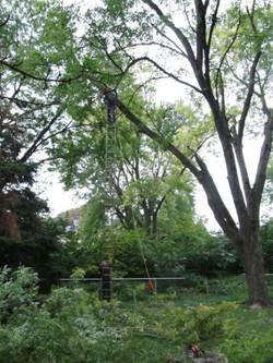 David climbing tree