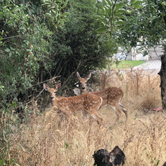 Little visitors