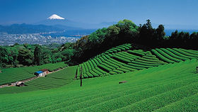 CENTRAL AREA, SHIZUOKA