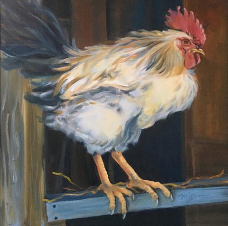 Windmist Farm Rooster