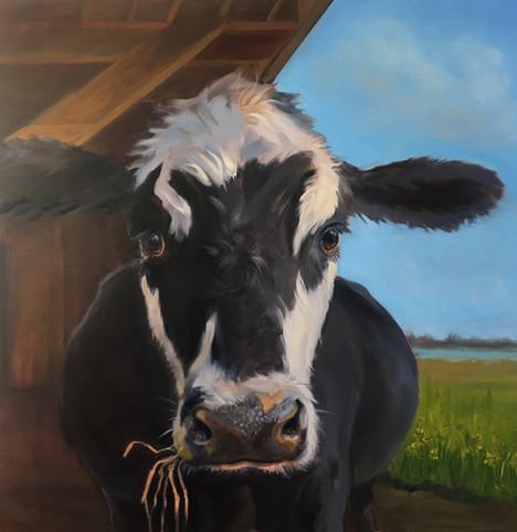 Deb's Cow