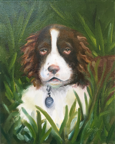 Wrigley—English Springer Spaniel