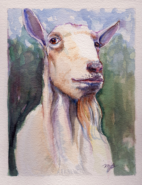 Socha the Old Goat