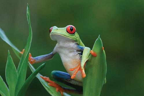 Frog Watching Walk