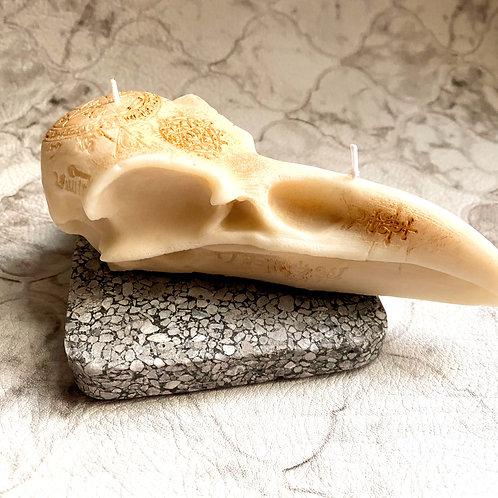 Raven God Skull (white wax)