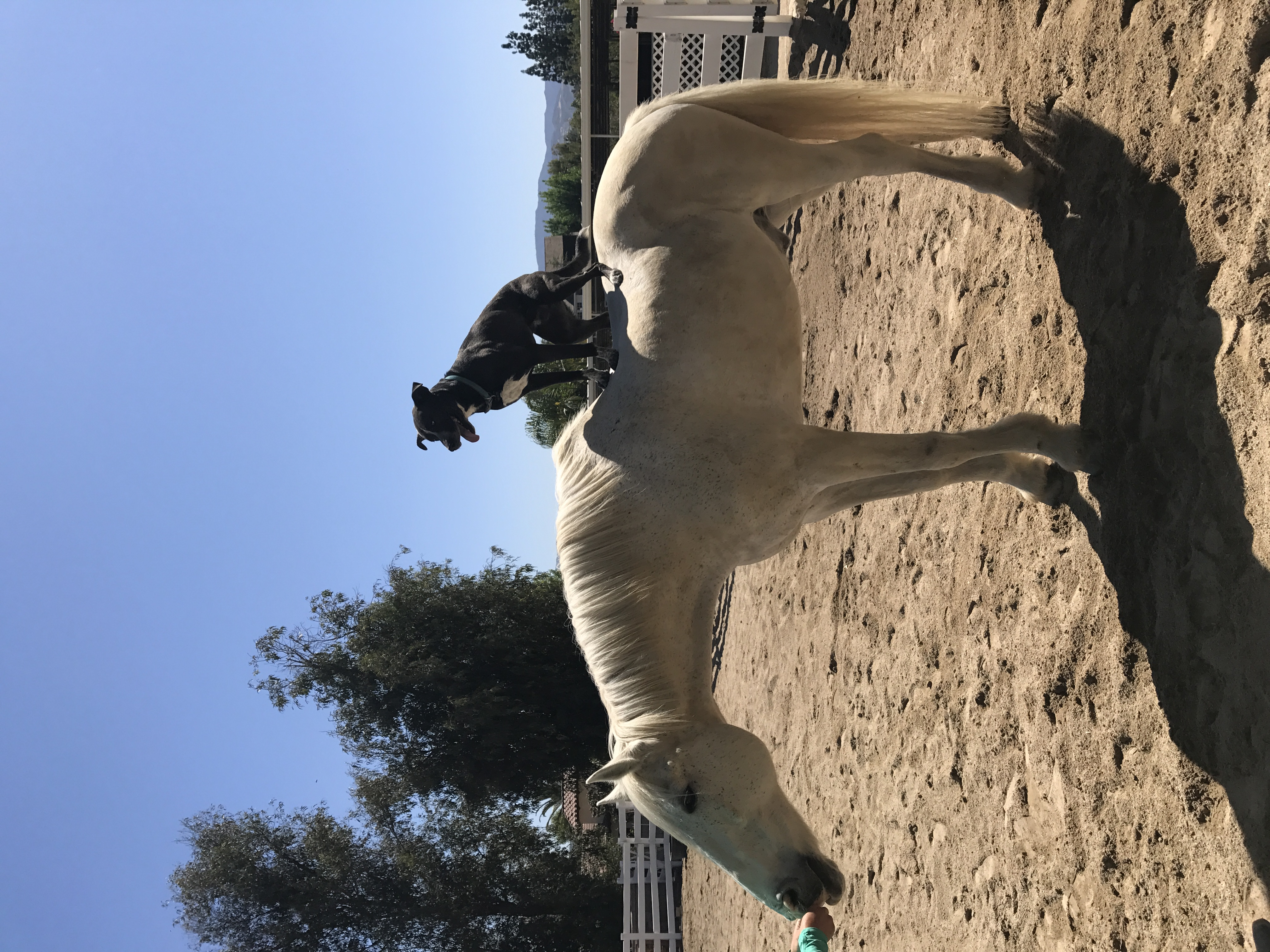 Fun at Pacific Star Horse Camp