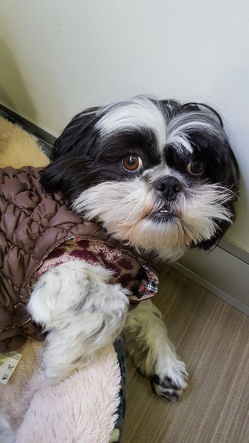 perro/ropa-perro/impermeable-perro/abrigo-perro