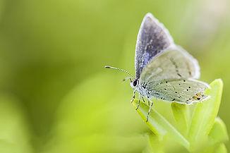 butterfly-5131967__480.jpg