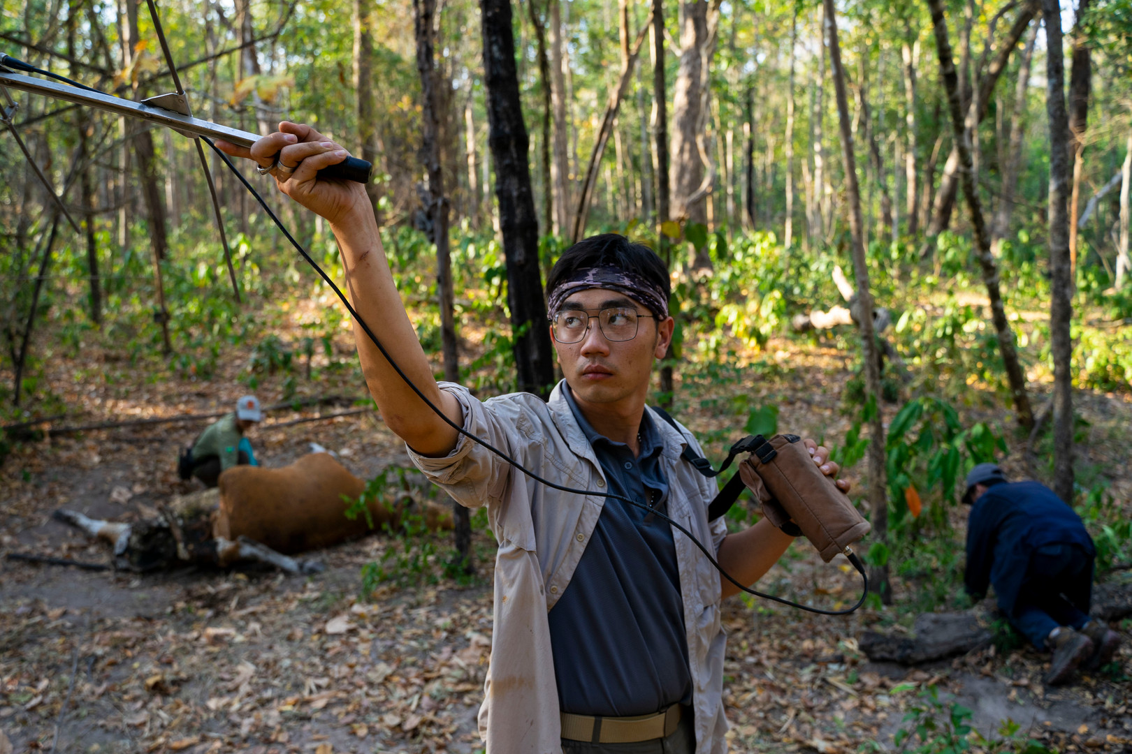 Chanon Chirajitmichai holds up a radio receiver to monitor for nearby collared tigers as snares are set near a Bantang killed the day before. Chorphaka Vijittrakoolchai, left, collects samples from the kill.