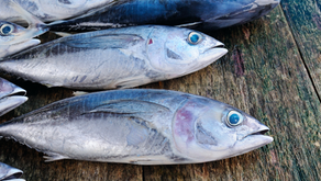 Eating Fish or Taking Fish Oil? What Do You Need to Know?