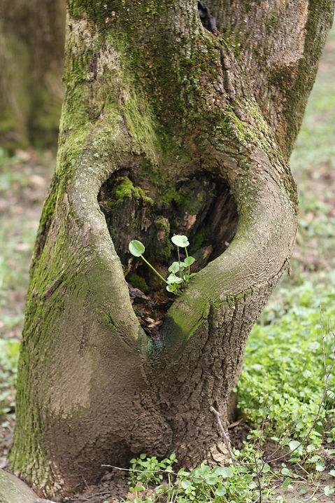 Canva - Heart, Tree, Love, Symbol, Shape