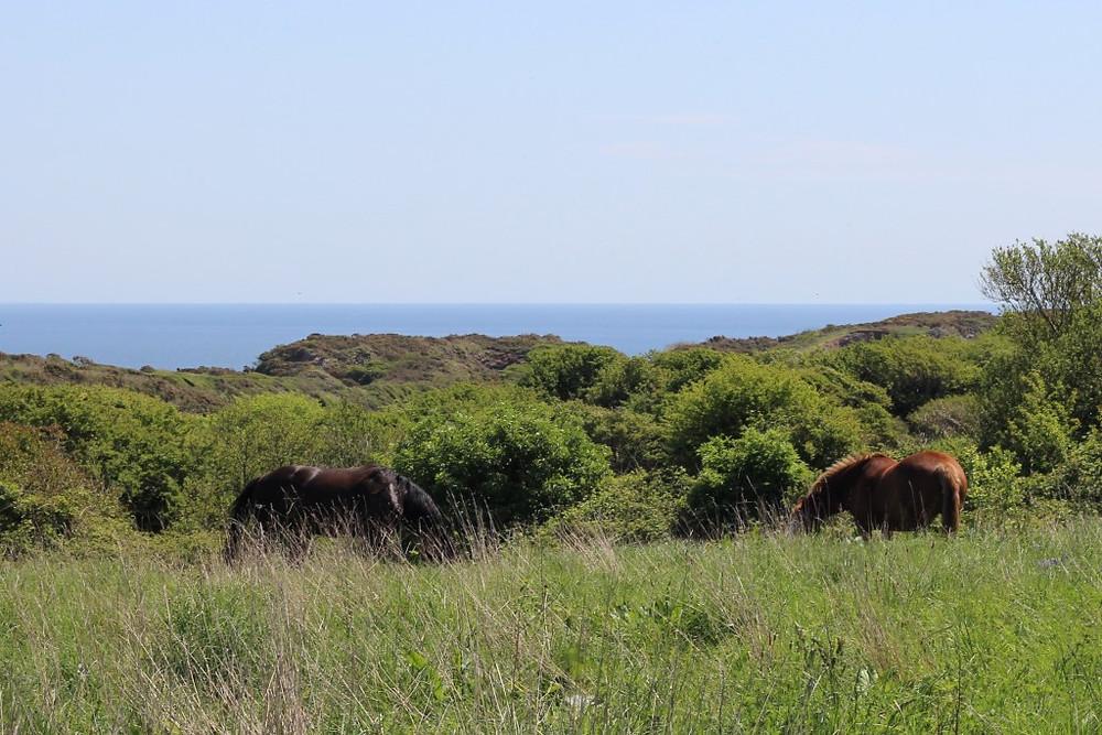 Jenni Nellist Animal Behaviourist Horses Translated Blog