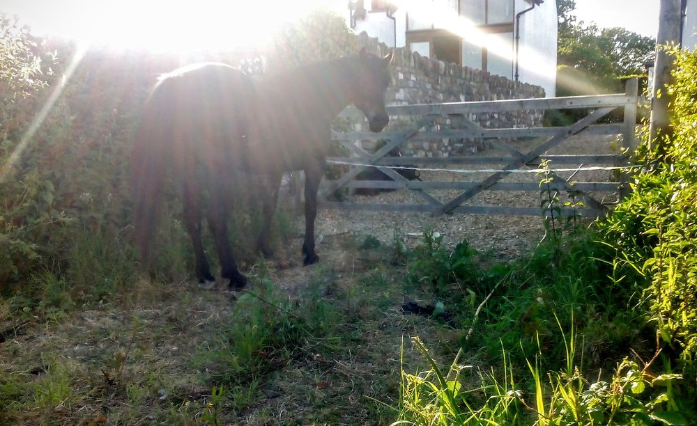 Jenni Nellist Animal Behaviourist Horses Translated Blog Loafing Horses