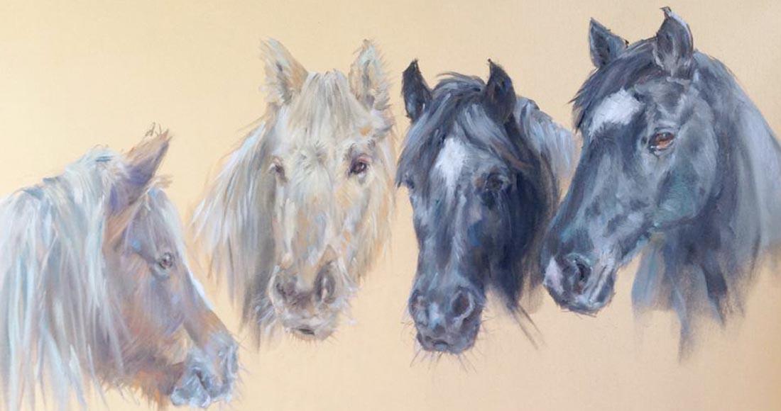 Horse Portraits © Sue McDonagh