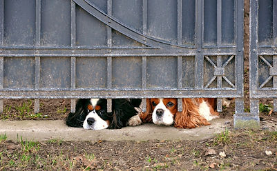 Dog separation anxiety Jenni Nellist Animal behaviourist dog behaviour south wales, dog behaviour gower, dog behaviour swansea