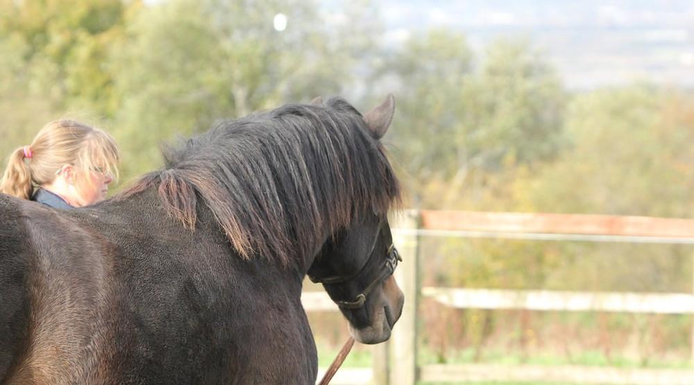 Jenni Nellist Animal Behaviourist Horses Translated Blog Way beyond Method