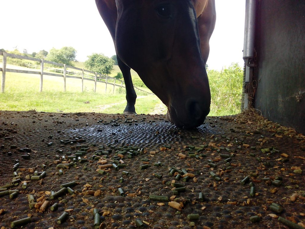 Jenni Nellist Animal Behaviourist Horses Translated Blog Loading Horses Positive Reinforcement