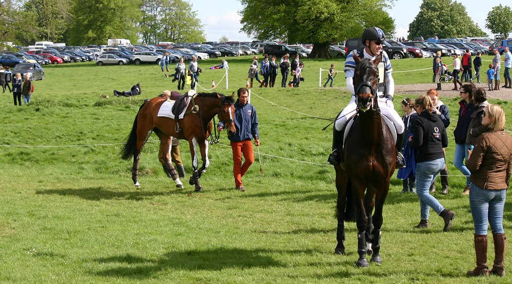 Behaviour of international Sports Horses Jenni Nellist Animal Behaviourist Horses Translated Blog